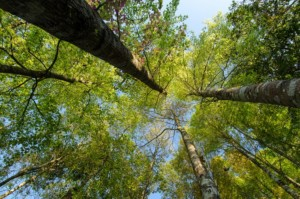 Tree Canopy, Green Building, Green Air Environmental, Indoor Air Quality, Earth Day, Conservation