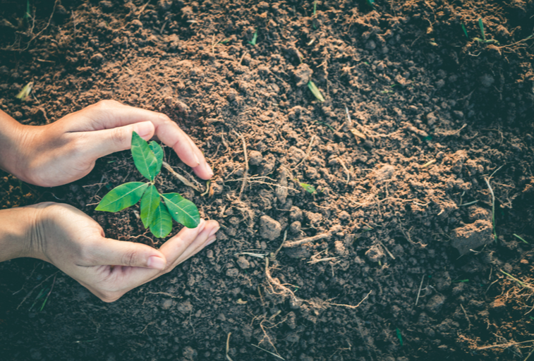 Person Giving Back to the Environment and Community by Planting a Small Seed